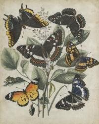 Butterfly Haven II | Obraz na stenu