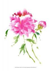 Peonies in Pink I | Obraz na stenu
