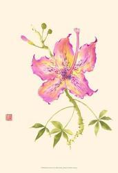 Hibiscus Flower IV | Obraz na stenu