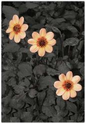 #6 Special Garden | Obraz na stenu