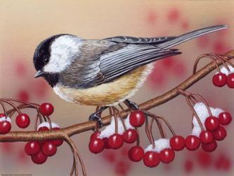 Chickadee With Berries | Obraz na stenu