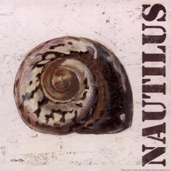 Nautilus | Obraz na stenu