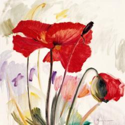 Crimson Poppy 2   Obraz na stenu