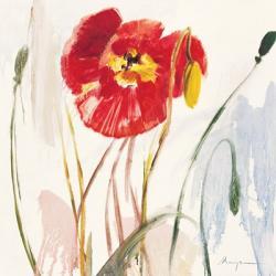 Crimson Poppy 3 | Obraz na stenu