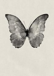 Black Butterfly on Tan | Obraz na stenu