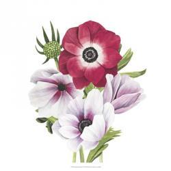 Anemone Blooms I | Obraz na stenu