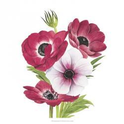 Anemone Blooms II | Obraz na stenu