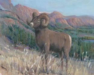Animals of the West IV | Obraz na stenu