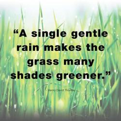 A Single Gentle Rain - Henry Thoreau Quote (Light) | Obraz na stenu