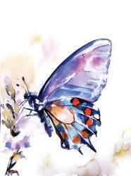 Butterfly | Obraz na stenu