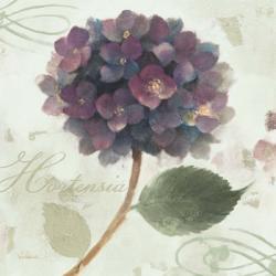 Abundant Hydrangea II Blue Green | Obraz na stenu
