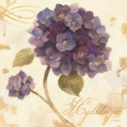 Abundant Hydrangea I | Obraz na stenu
