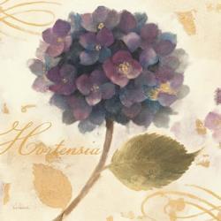 Abundant Hydrangea II | Obraz na stenu