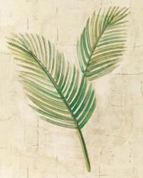 Sago Palm Leaves Neutral Crop | Obraz na stenu