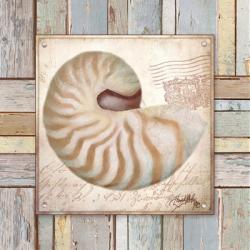 Beach Shell III | Obraz na stenu