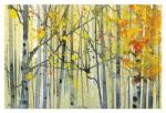 [Autumn Birches]