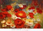 [Meadow Poppies I]