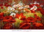 [Meadow Poppies II]
